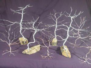 Display of tree options